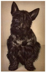 Dog , Scotch Terrier