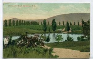 Sterling Orchard Kelowna British Columbia Canada 1910s postcard