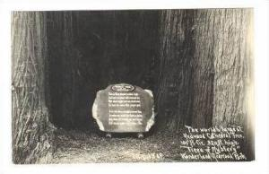 RP  The World´s Largest Redwood Cthedral Tree,  Trees of Mystery  Wonderland...