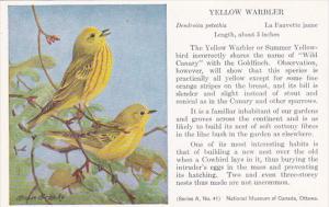 Birds Yellow Warbler National Museum Of Canada Ottawa