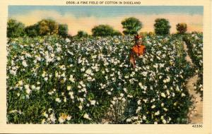 Dixieland - Field of Cotton
