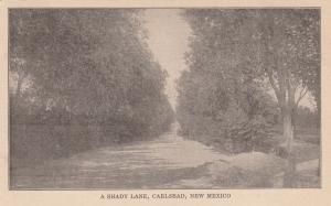 CARLSBAD , New Mexico, 1901-07 ; A shady Lane