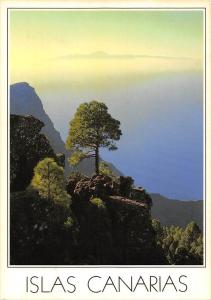 Spain Islas Canarias Tenerife seen from the Tamadaba pine forest, pilgrimage