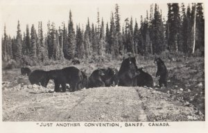 RP; Black Bear Convention , BANFF , Alberta , Canada , 1920-30s