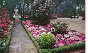 Alabama Mobile Camellia Lined Flagstone Walk Bellingrath Gardens