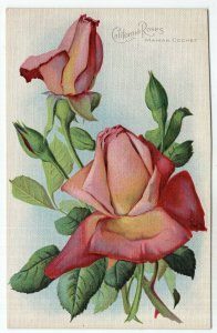 California Roses, Maman Cochet