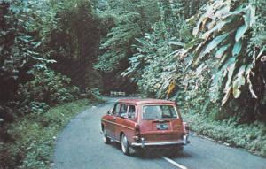 Automobile, Lush Tropical El Yunque Rain Forest, El Yunque, Palmer, Puerto Ri...
