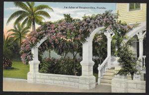 Arbor of Bouganvillea Florida Unused c1910s