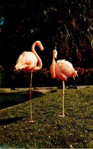 Flamingos In Stanley Park Canada
