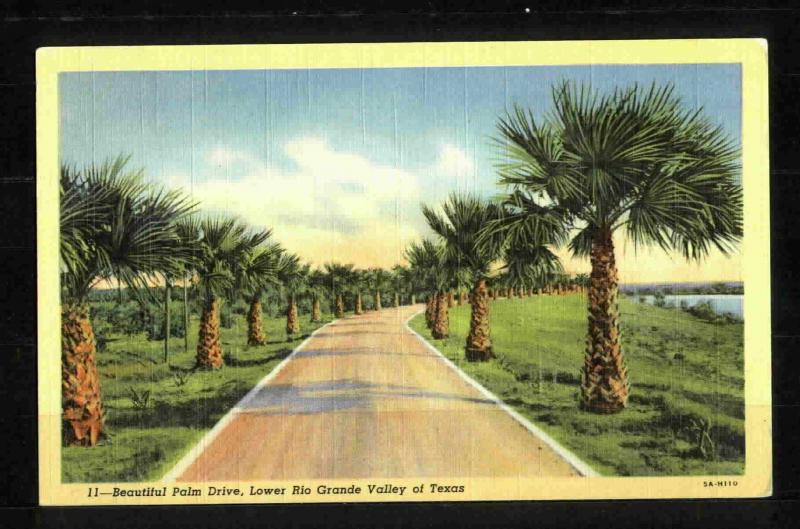 POSTCARD-Palm Drive-Lower Rio Grande Valley of Texas