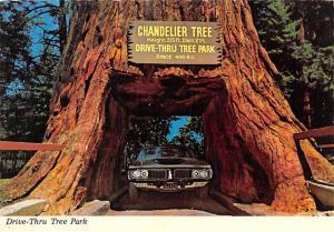 Drive Thru Tree Park - California