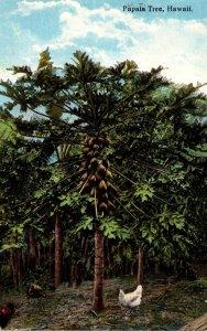 Hawaii Typical Papaya Tree Curteich Curteich