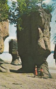 The Rocks, Hopewell Cape,  N.B., Canada,  40-60s
