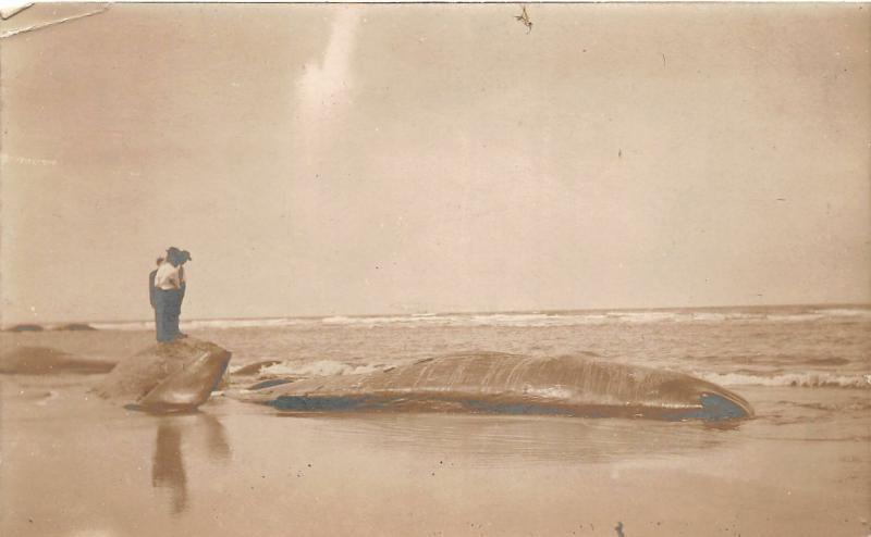 F25/ Interesting RPPC Photo Postcard c1910 Dead Whale Men Ocean Shore 3
