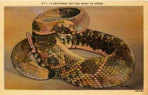 Southwest Rattlesnake