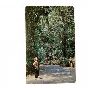 Ocho Rios Jamaica Fern Gully Postcard