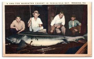 Mid-1900s One-Ton Maneater Shark Caught in Pensacola Bay, Pensacola, FL Postcard
