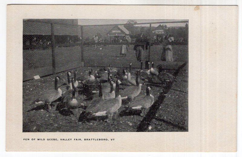 Brattleboro, Vt, Pen Of Wild Geese, Valley Fair