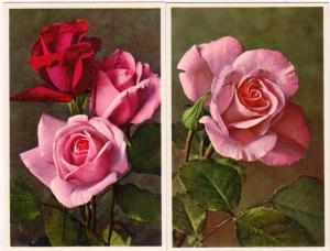 2 - Cards with Roses