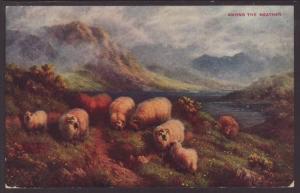 Sheep,Among the Heather Postcard