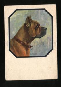 001015 Portrait of GREAT DANE by MERKER vintage Color PC