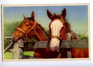 176560 Thoroughbreds HORSE in Stable old PHOTO PC