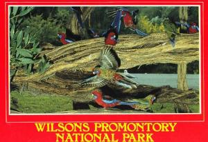 Wilsons Promontory National Park Crimson Rosella Australia Australian Postcard