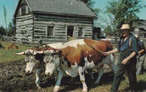 Ploughing, Oxen,Upper Canada Village, MORRISBURG, Ontario, Canada, 40-60s