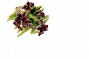 Victorian Purple Flower Paper Scrap, 1 - 2 inches