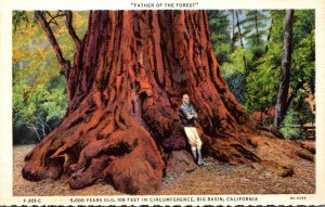 California Big Basin Father Of The Forest 5000 Year Old Redwood Tree Curteich