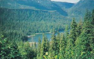 The Future Of Alaska's Tongas National Forest Alaska 1988