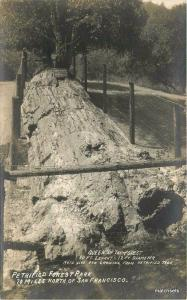 1920s Petrified Forest Queen Sonoma Calistoga California RPPC Real Phot