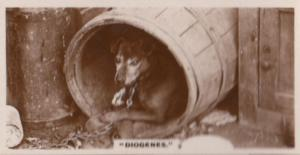 Diogenes Beer Barrell Chained Dog Antique German Real Photo Cigarette Card