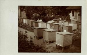 Apiary Beekeepers Beekeeping Beehive Bee (1910s) RPPC Postcard
