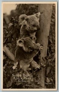 Real Photo Postcard~Sydney Australia~Koala Park~Native Bears in Tree~1930s RPPC