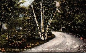Minnesota Minneapolis Birches In Camden Park Drive