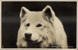 Samoyed Dog TUCK Real Photo Postcard I BELIEVE IN KEEPING WARM