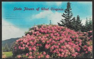 West Virginia, State Flower, Rhododendrons, mailed in 1977