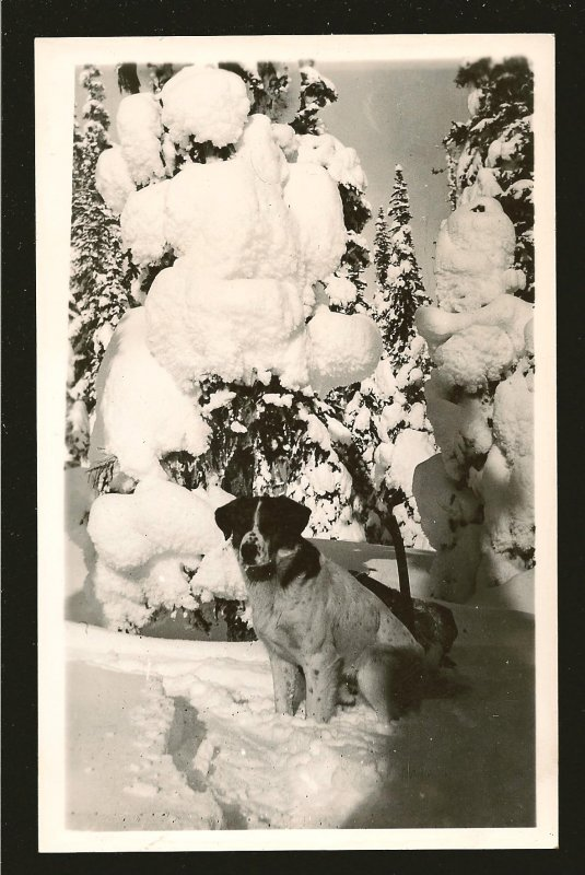 Made in Canada Large Dog in Winter B&W Real Photo Postcard Unposted