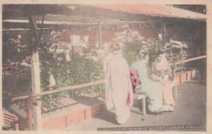 Yokohama Chrysanthemum Japanese Nozawa's Garden Japan Antique Postcard