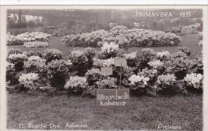 Netherlands Aalsmeer Primavera 1933 Flower Show Real Photo