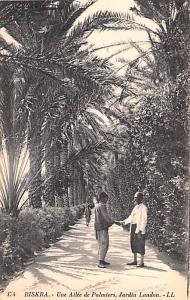 Biskra Algeria, Alger, Algerie Une Allee e Palmiers, Jardin Landon Biskra Une...