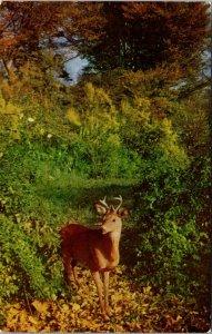 Vintage Postcard Greetings From Moosehead And Katahdin Maine Adrienne Russ Deer