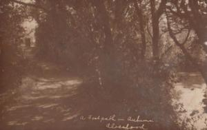 Alresford A Forest Footpath In Autumn Hampshire Antique Old Real Photo Postcard