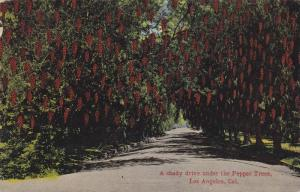 A shady drive under the Pepper Trees, Los Angeles,California,PU-1914