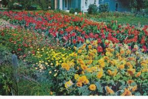 Indiana Goshen Beautiful Flowers