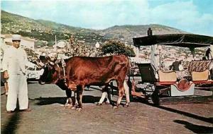 Portugal, Madeira, Funchal, Bullock Car, Dexter Press 4148-C