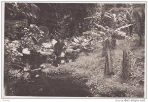 RP: Jungle Scene, Banana Trees, Tahiti, 10-20s