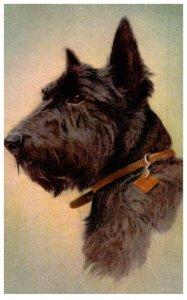 Dog ,  Sotch Terrier