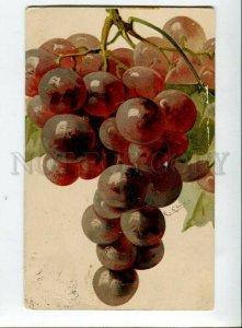 3134494 Dark GRAPES by C. KLEIN vintage TUCK Publ. 6118 pc